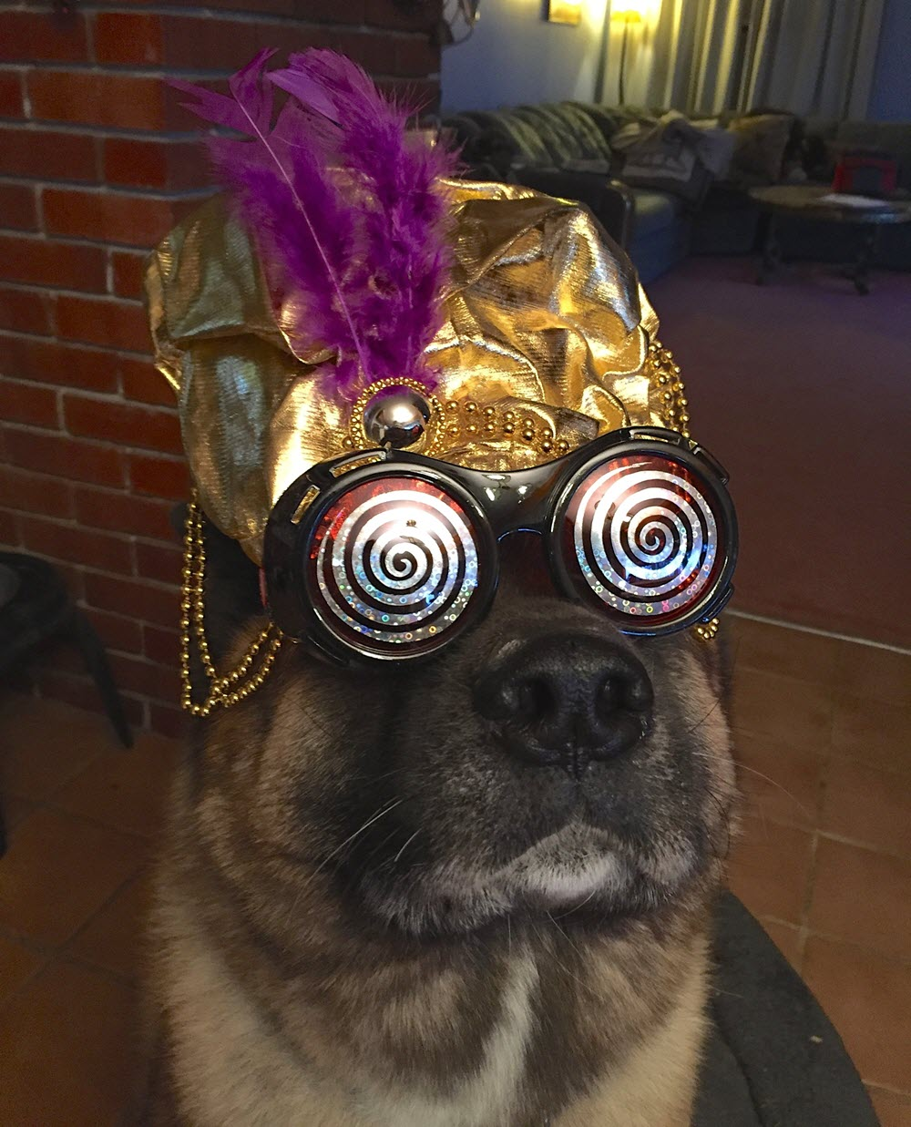 Reggie the psychic, mind reading dog